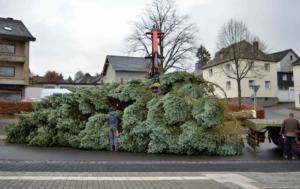 005-aufstellen-weihnachtsbaum-2017