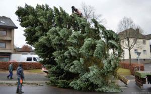 006-aufstellen-weihnachtsbaum-2017