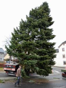 007-aufstellen-weihnachtsbaum-2017