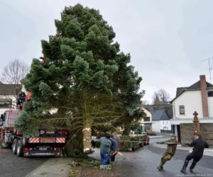 008-aufstellen-weihnachtsbaum-2017