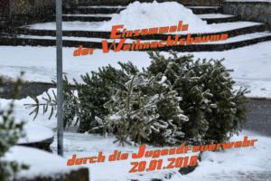 2018 Einsammeln Weihnachtsbäume